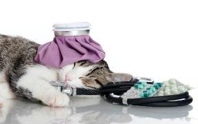 Curso Básico a distancia de Primeros Auxilios a Animales Domésticos
