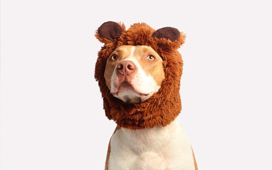 Curso online Acepta a tu perro tal como es