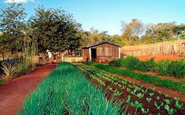 Curso online de Agricultura Ecológica: fertilización, suelos y cultivos