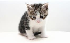 Curso a distancia (Online) de Cuidados del Gato