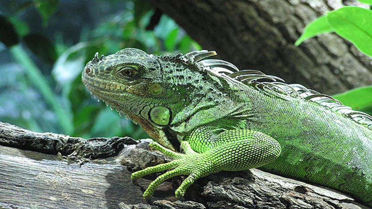 Curso online de Cuidados de Reptiles y Anfibios - Aprendum