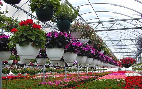 Curso online Profesional de Horticultura y Floricultura